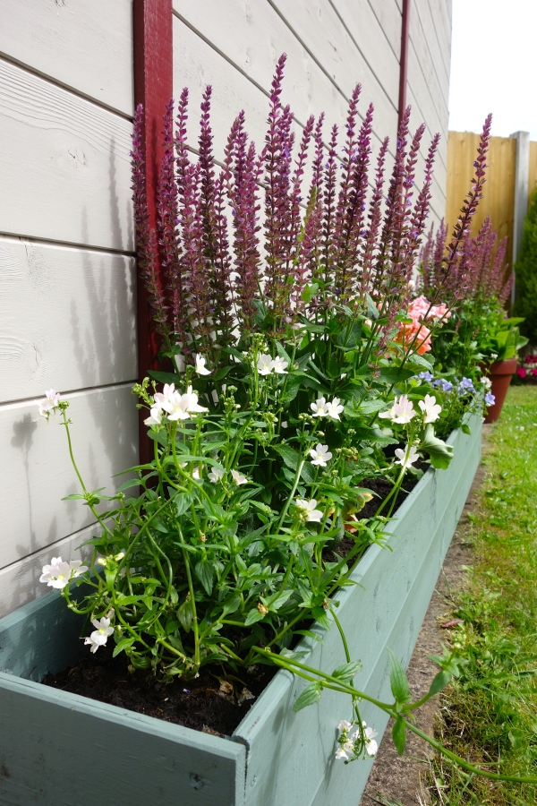 home made trough planter wild thyme garden shades