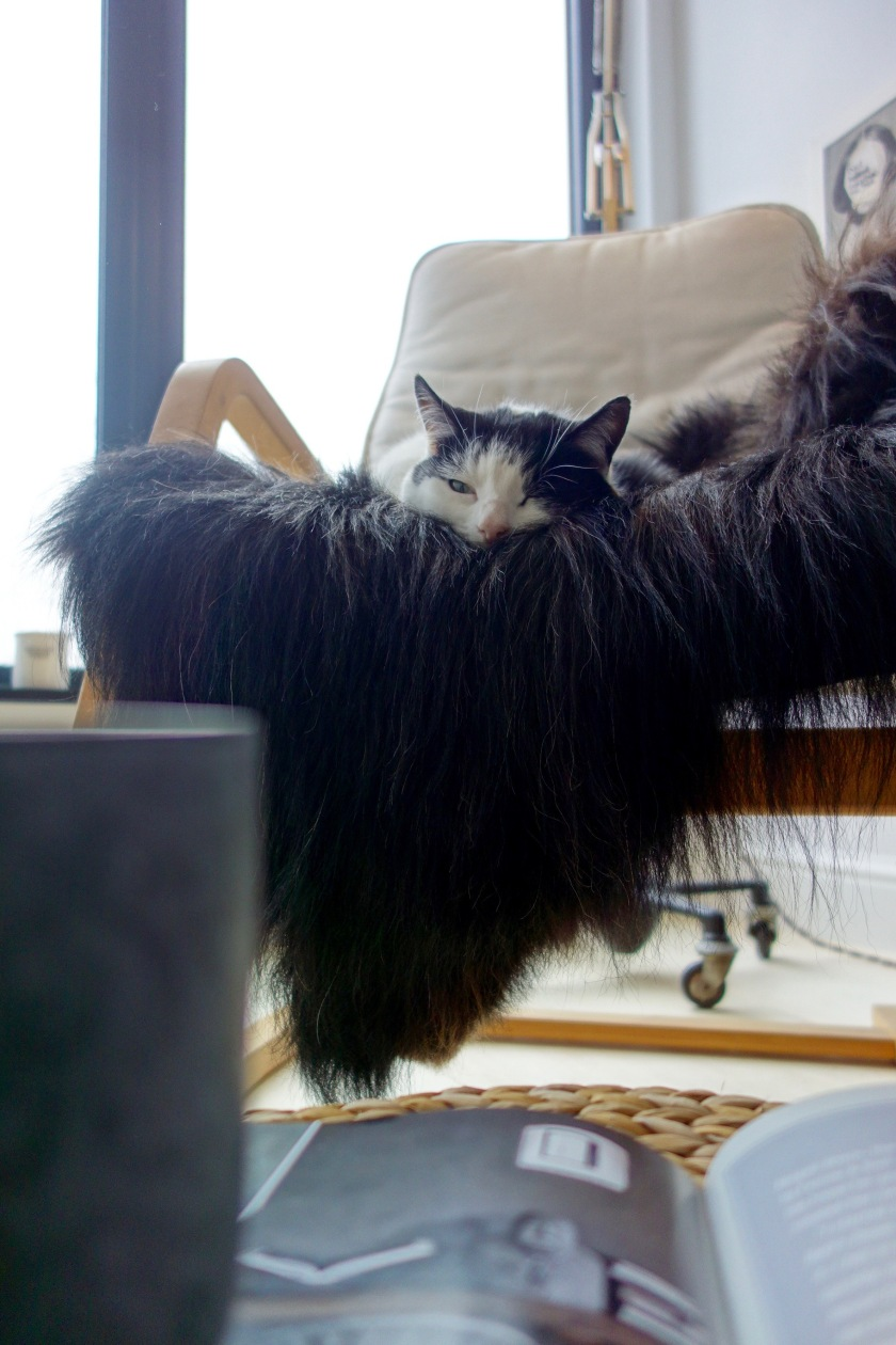 black-icelandic-sheepskin